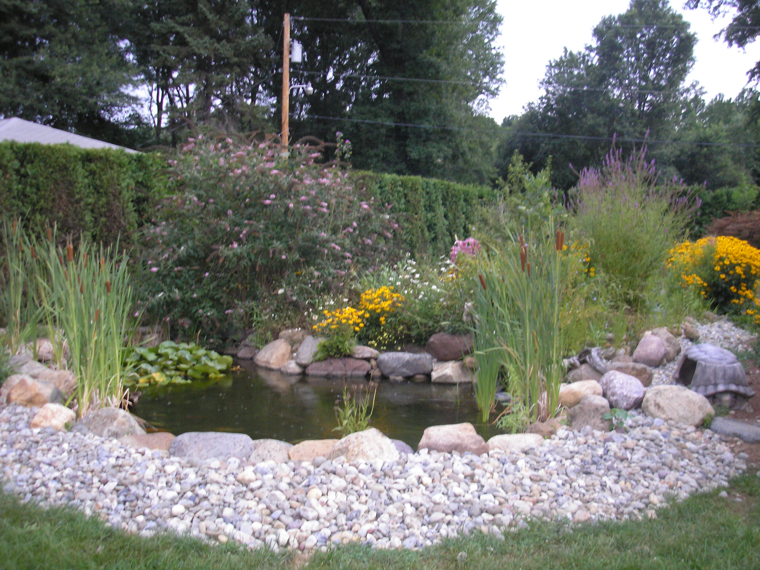 Pictures of fish ponds with waterfalls images for Ponds and waterfalls